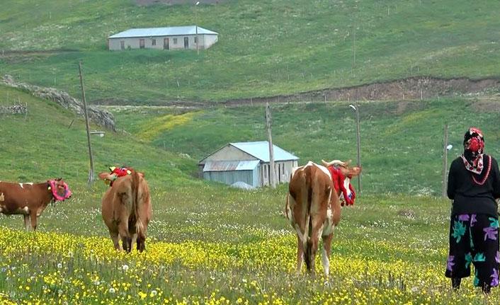 Trabzon'un yaylalarında 'toplu bulaş' uyarısı