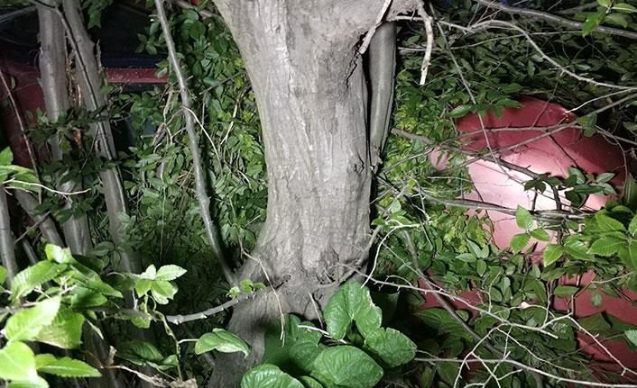 Ölüme 2 metre kala hayatlarını ağaç kurtardı