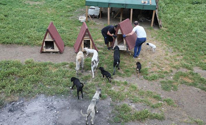 Sokak hayvanları yeni kulübelerine kavuştu
