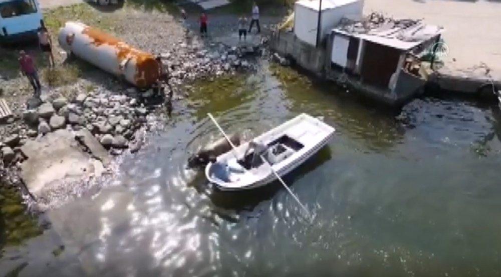 Rize'de kurbanlık boğa kaçarak kendini denize attı