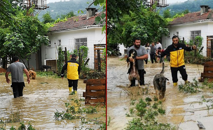 Artvin'de selin vurduğu barınaktaki hayvanların yardımına gönüllüler koştu