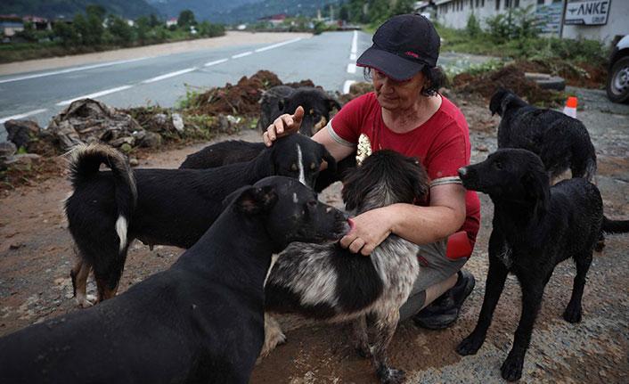 Selde kurtarılan hayvanlara Trabzon Belediyesi sahip çıktı