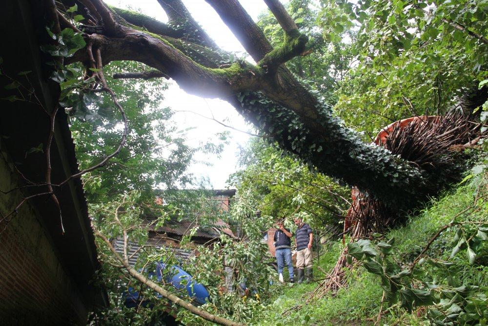 Giresun'da ağaç evin üzerine devrildi