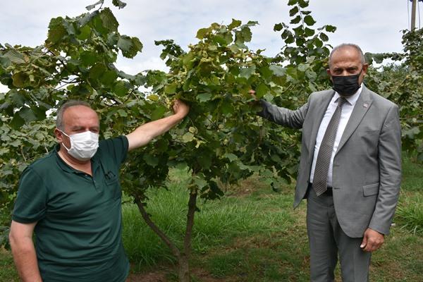 Trabzon'da fındık üreticilerine önemli uyarı