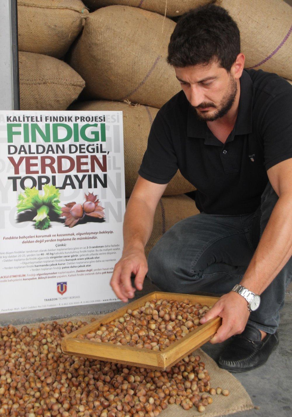 """Trabzon'da fındık üreticisine acil çağrı! """"Daldan değil, yerden toplayın"""""""