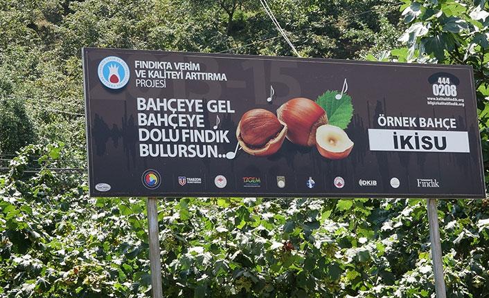 Dünya Fındık Haftası ilk kez Trabzon'da kutlanacak