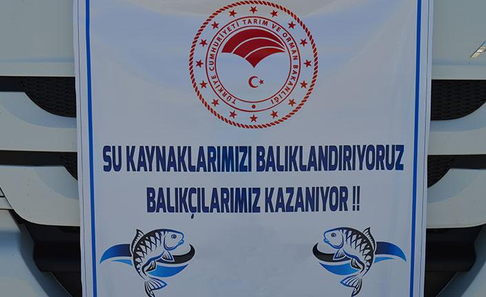 Elazığ'dan Trabzon dahil 17 ile 12 milyon sazan yavrusu