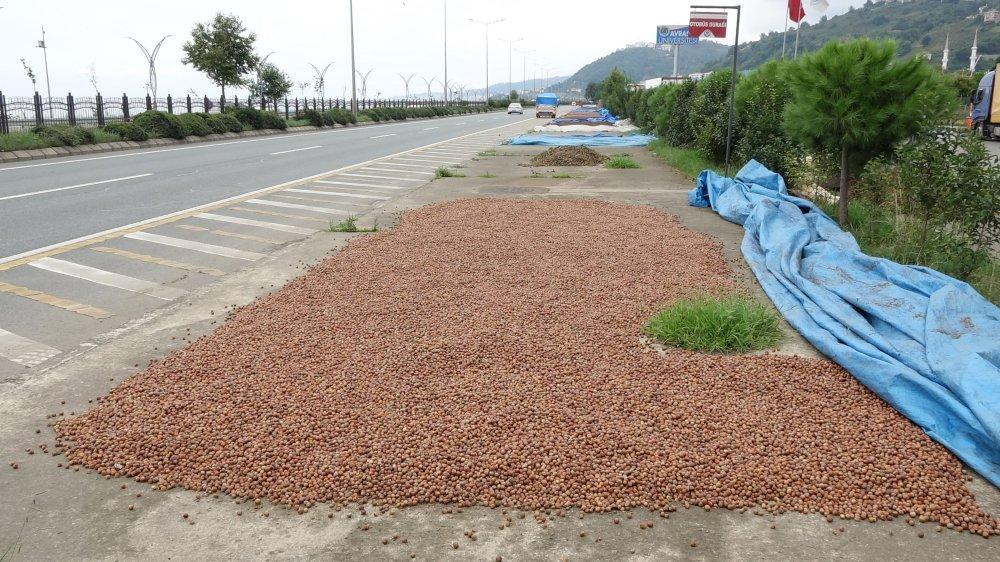 Trabzon'da üreticiler güneşi bekliyor