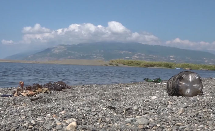 Akdeniz'de sızıntı krizi! Petrole bulanmış deniz kaplumbağası sahile vurdu