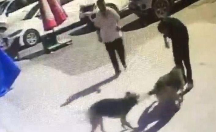 Köpekleri boyunlarına ip takarak topladı