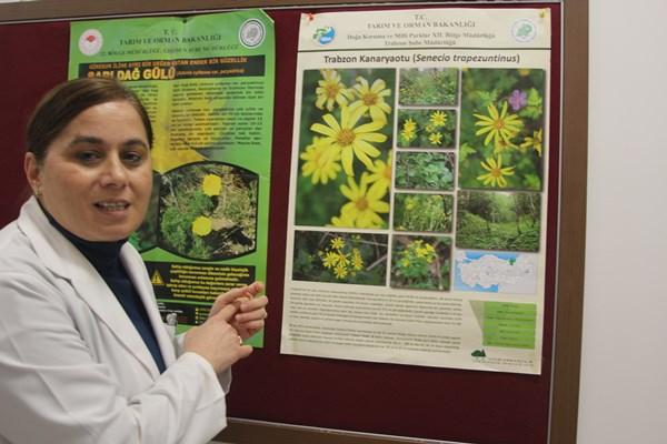 KTÜ'de araştırılıyor! Endemik iki bitki ilaç olma yolunda