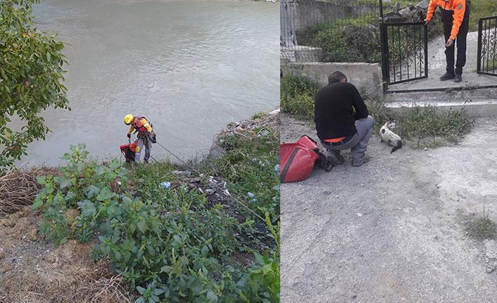 AFAD ekibi Çoruh nehrine düşen kedi için seferber oldu