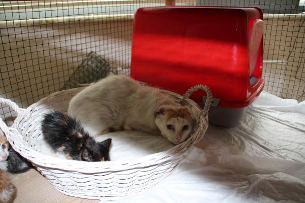 Makam odası yaralı kedilerin yuvası oldu