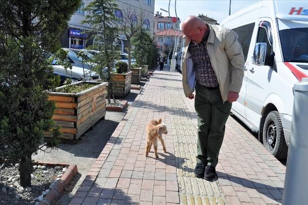 Trabzonlu adamla oğlağın dostluğu yürekleri ısıtıyor