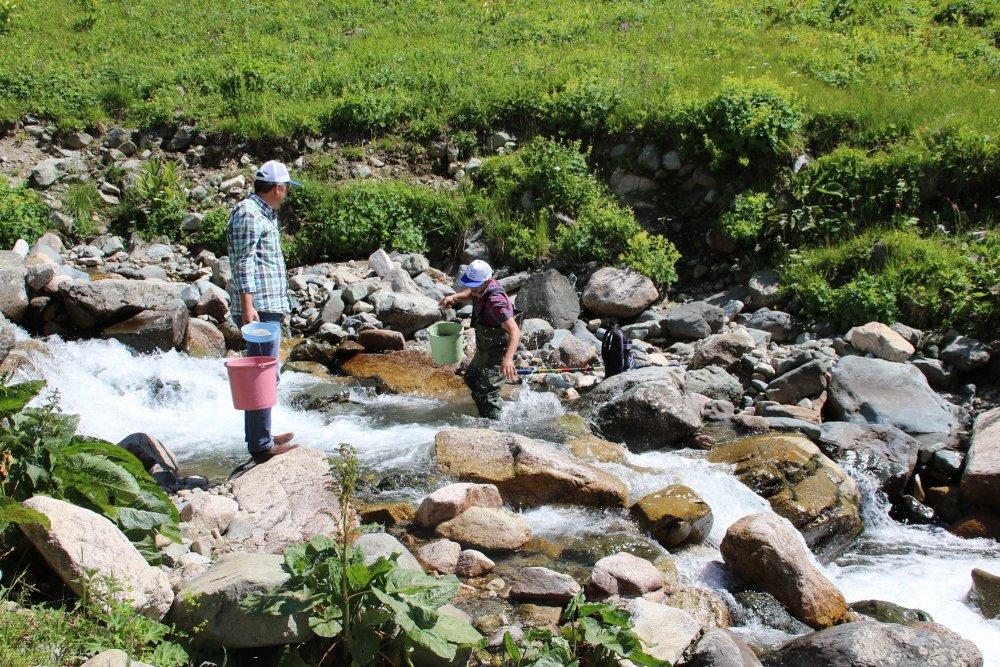 Trabzon'da derelere 562 bin alabalık salındı