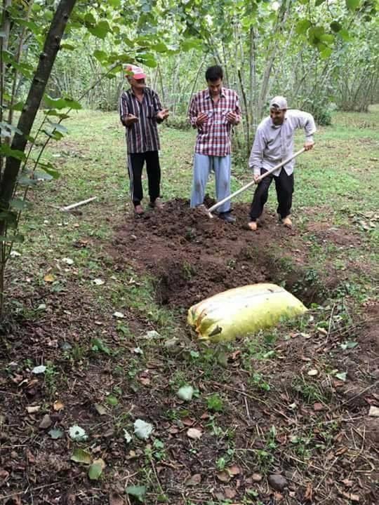 Fındık üreticisinden tepki: Bir çuval fındığı mezara koydular