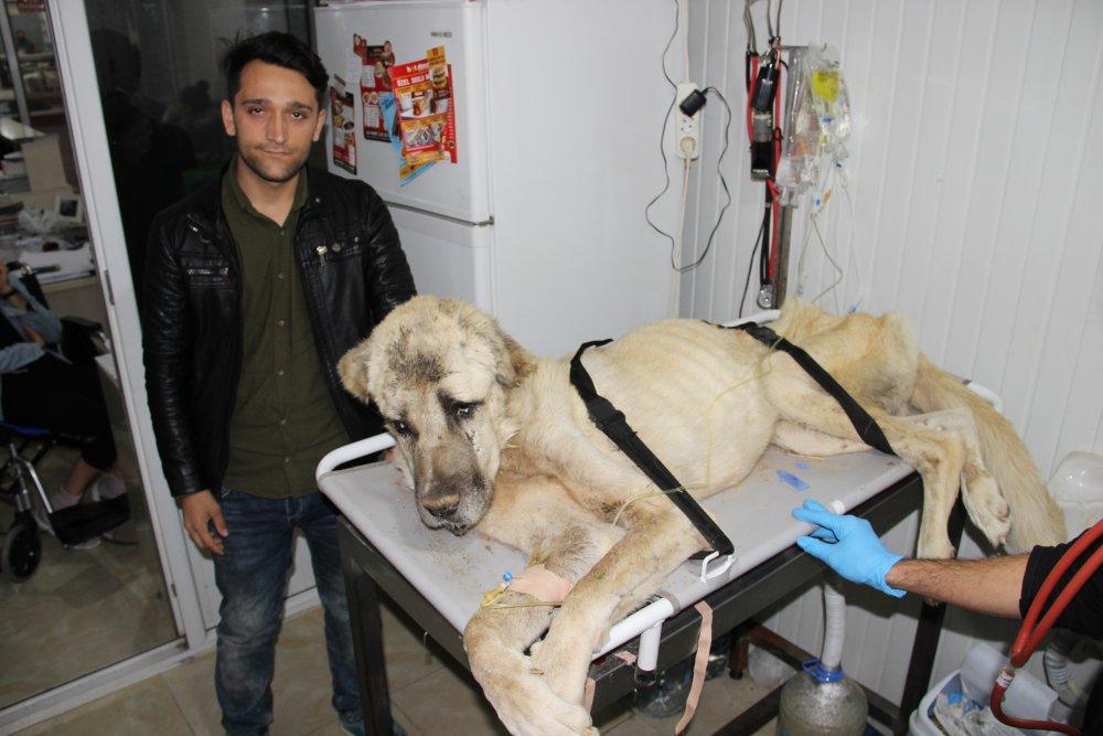 Hayvanseverleri kahreden haber... 'Şanslı' kurtarılamadı