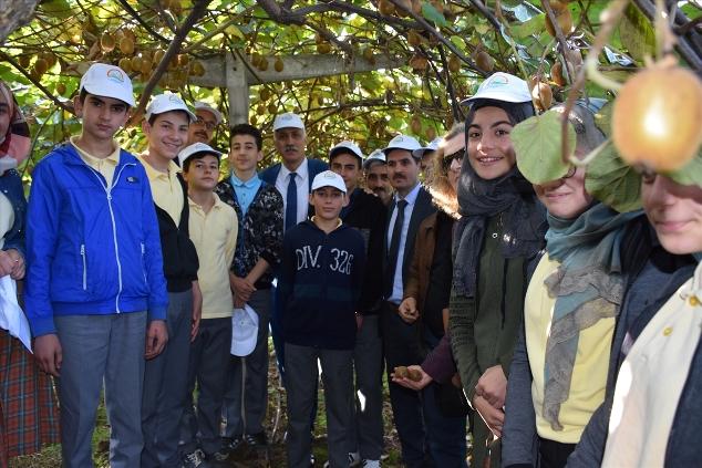 Trabzon'da öğrenciler kivi hasadı yaptı