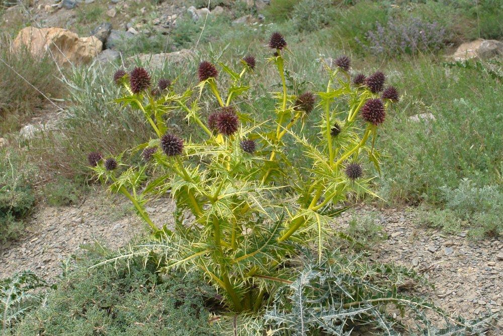 Ünlü botanikçi 4 yeni bitki türü keşfetti