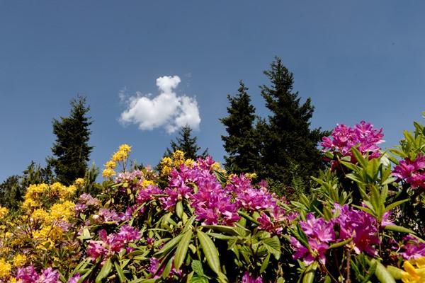 """Bulutlara komşu """"Sis Dağı"""" görsel şölen sunuyor"""