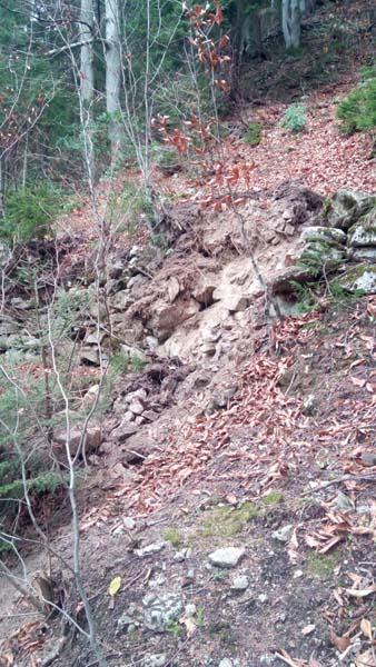 Trabzon'da vatandaşlar isyanda – Orman kesimi tehlike yaratıyor