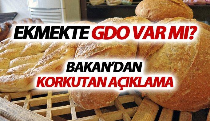 GDO'lu Ekmek için yeni gelişme