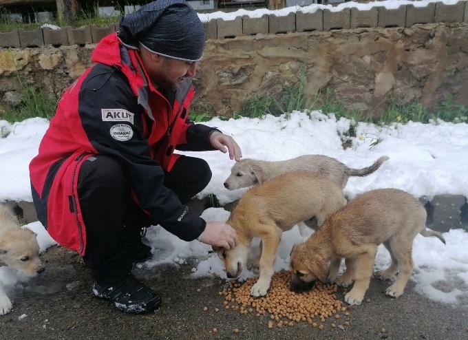 AKUT sokak hayvanlarına yarım ton mama ve su dağıttı