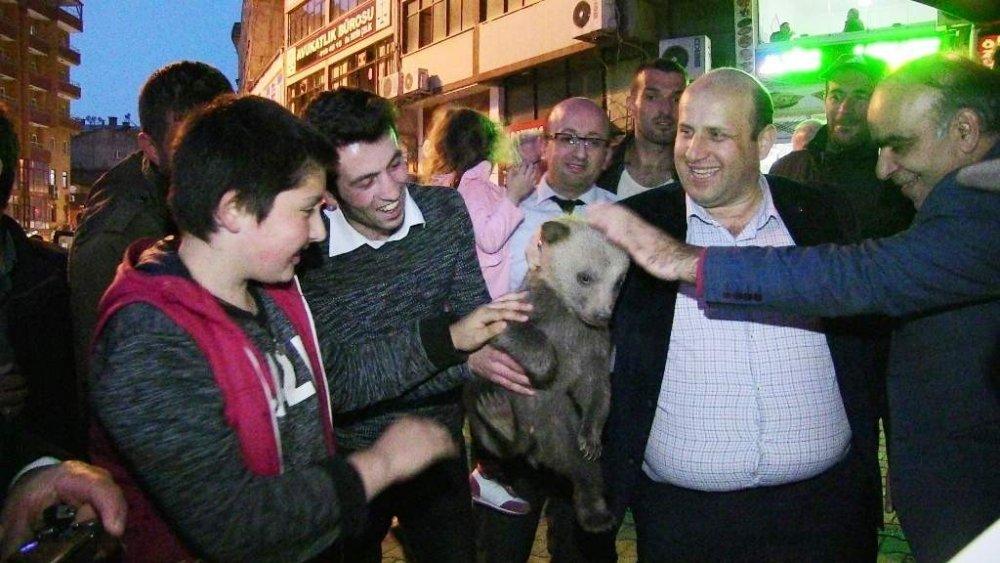 Yavru ayıları köpeklerden kurtardılar