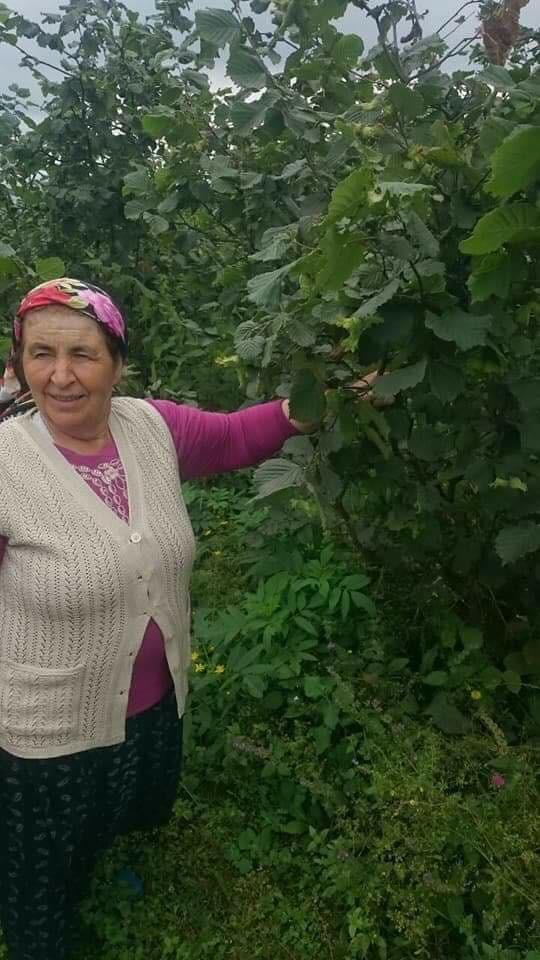 Ordu'da 60 yaşındaki kadın ortadan kayboldu: Her yerde aranıyor