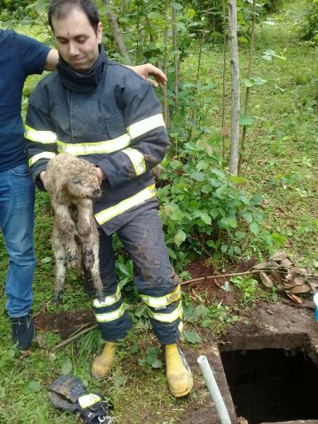 Trabzon'da kuzuyu kurtarma perasyonu