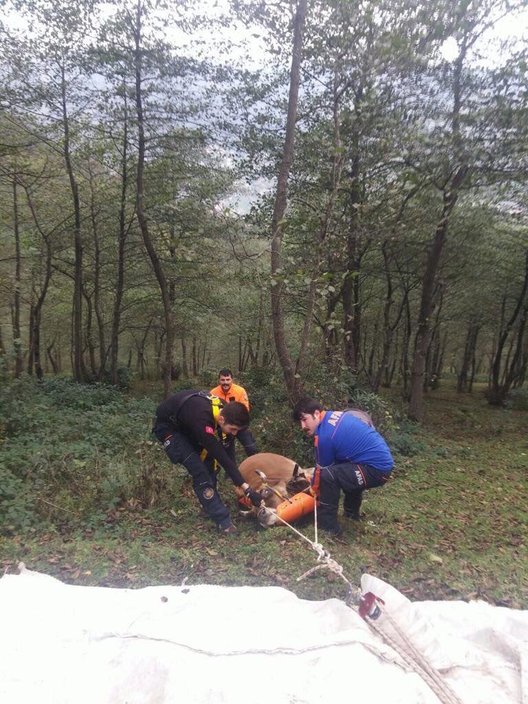 Trabzon'da yamaçtan düşen inek kurtarıldı