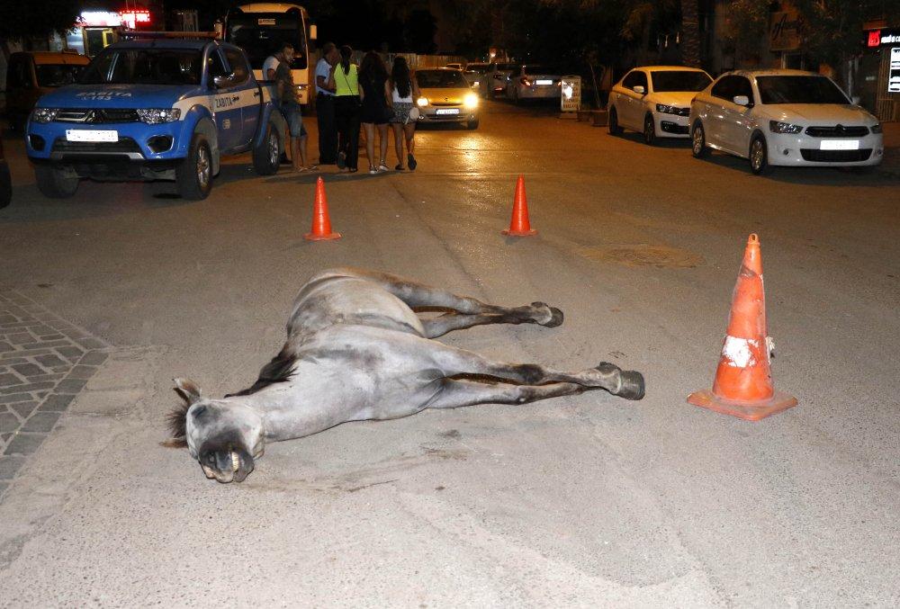 Atı ölen faytoncu intihar etti