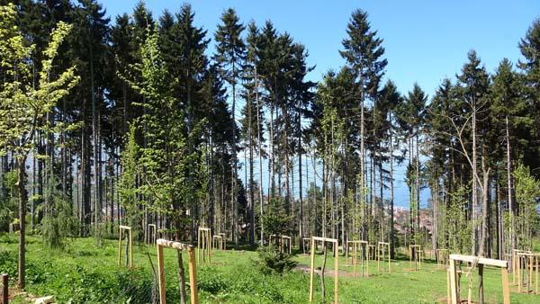 Trabzon'da Atatürk Köşkü Ormanları'ndan iyi haber