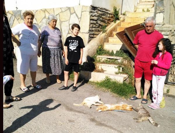 Bodrum'da zehirli balık kedileri telef etti