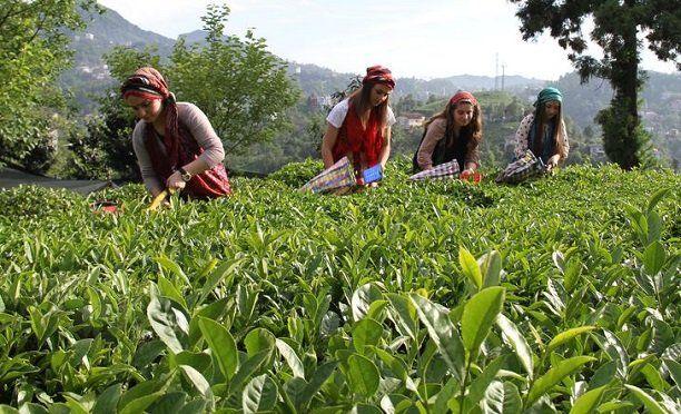 Türk çayında özel sektör ilki başardı