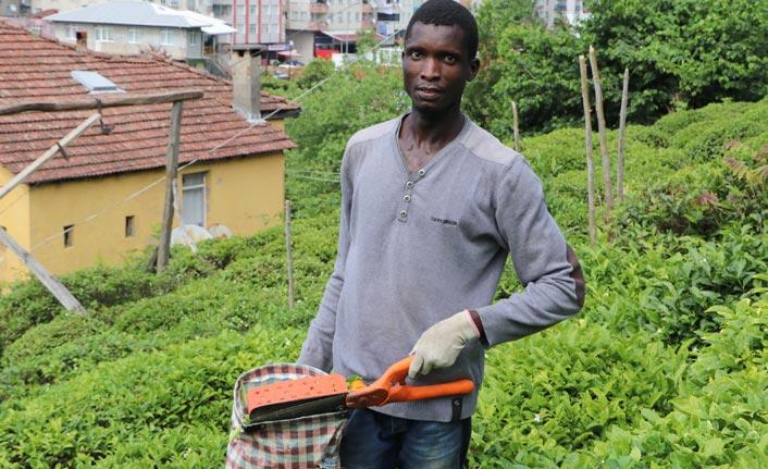 Çay bahçeleri Birleşmiş Milletler'e döndü