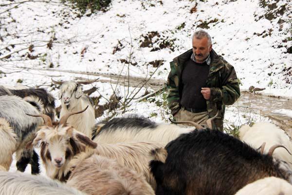 Rize Çobanların zorlu dönüş yolculuğu