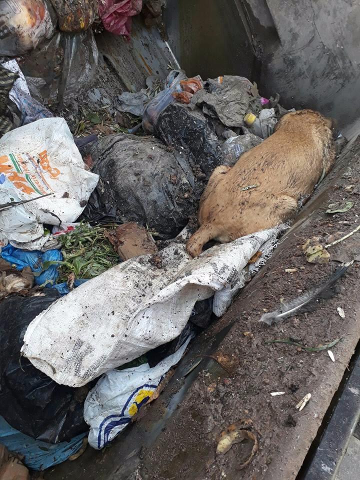 Vicdansızlar! Köpeği çuvala koyup çöpe atmışlar