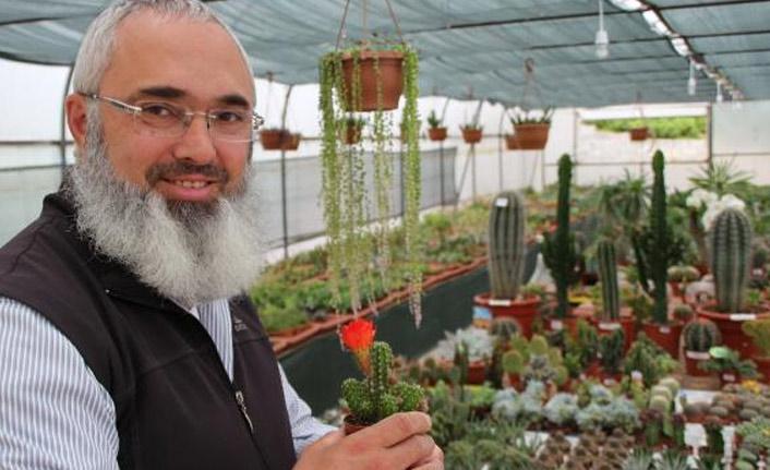 Serada 500 çeşit kaktüs yetiştiriyor