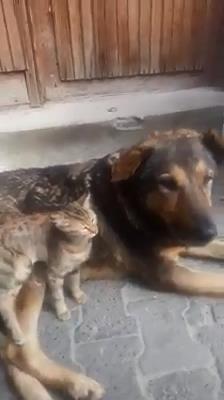 Kedi ile köpeğin dostluğu ilgi çekti