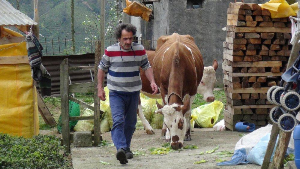 Odada ürettiği yemle, hayvanların süt verimini iki katına çıkardı
