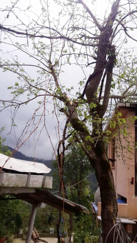 Rize'de fırtına nedeniyle 2 katlı ev çöktü 2