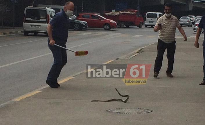 Trabzon'un merkezinde yılan paniği! Fırça ile peşine düştüler