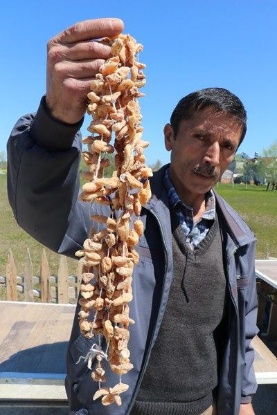 Samsun'da salep tarımı 3