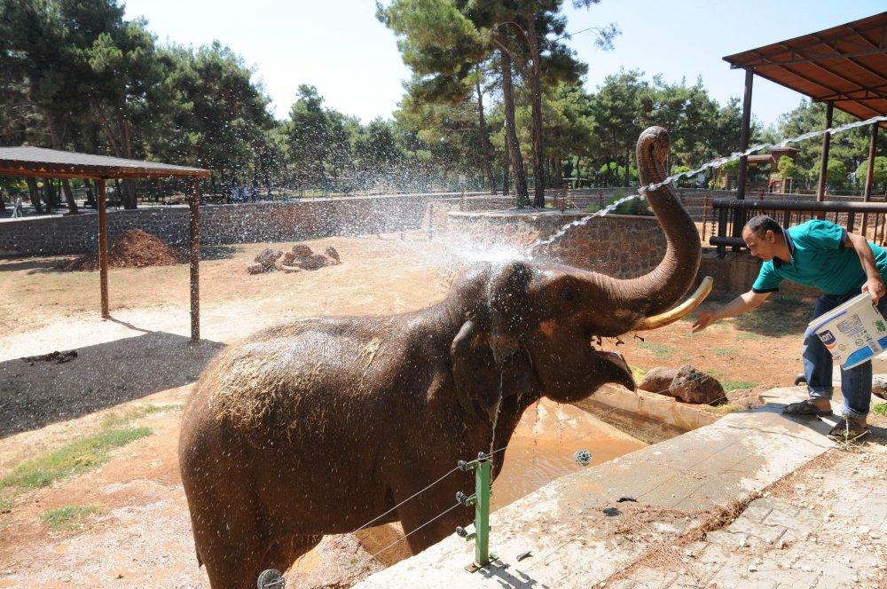 Pili ve Gabi çamurla serinliyor