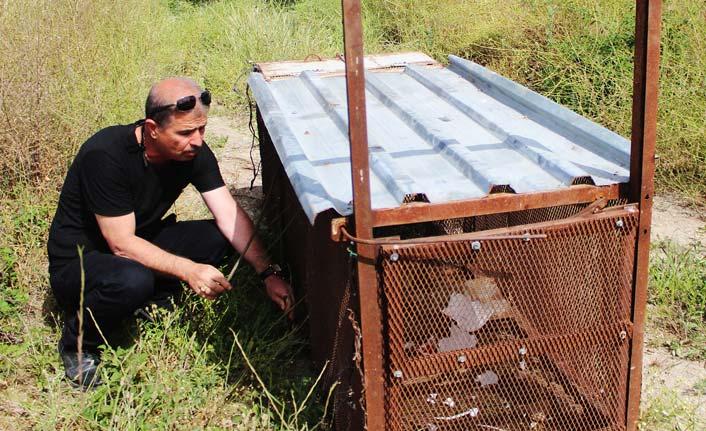 150 tavuğu telef eden tilkiyi Battal Gazi'den esinlenip yakaladı