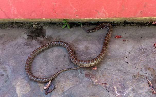 Çamaşır sepetinden yılan çıktı! 9
