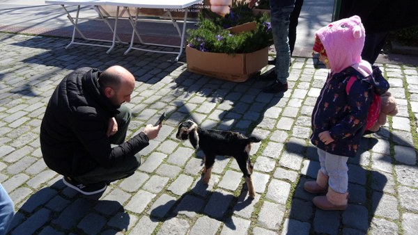 Trabzon'da Yavru keçi ilgi odağı oldu