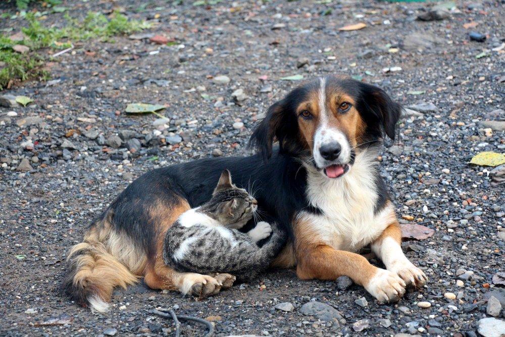 Yavru kediler ve köpeğin dostluğu