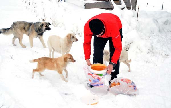 Trabzon'da iki esnaf köpekler için harekete geçti.